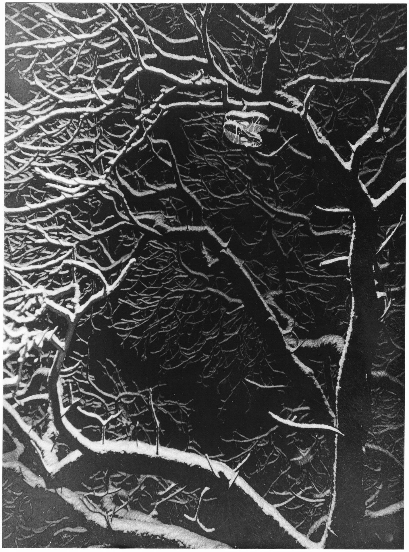 Trees, Snow and Sneakers Darkroom Print